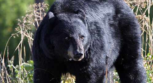 Blackbear at The Wiltern